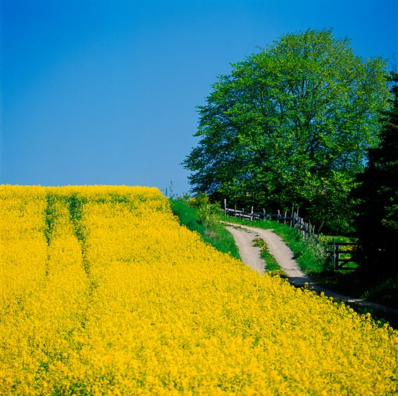 Naturbild AB +46 8 411 43 30 info@naturbild.se
